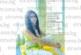"""Сладкогласната благоевградчанка Алекс Механджийска с номинация за Гран при в международния онлайн конкурс """"Abanico"""""""