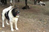 Тровят домашните кучета в Левуново