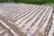 Градушка съсипа градините в трънското село Ярловци