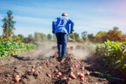 Безработните ще запазят социалните си помощи, ако се включат в сезонна селскостопанска работа