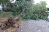 Огромно дърво падна върху 2-годишно дете в Кюстендил