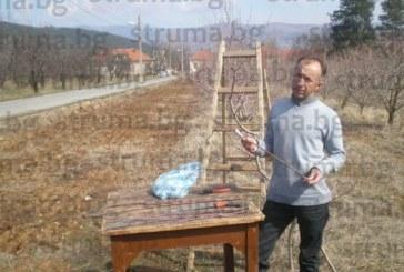 ОБРАТ В ПРОГНОЗАТА! Зам. шефът на Института по земеделие доц. д-р Д. Сотиров: Реколтата от череши в Кюстендилско се оказа около средното ниво, цената вероятно ще е 90 ст. на борсите, надяваме се на купувачи румънци