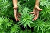 19-годишен кюстендилец отгледа в двора си марихуана за близо 10 000 лева