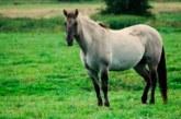 Кражби на животни край Симитли, двама стопани изгоряха
