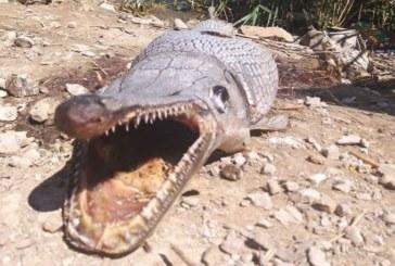 Край язовир! Откриха странно същество, подобно на алигатор