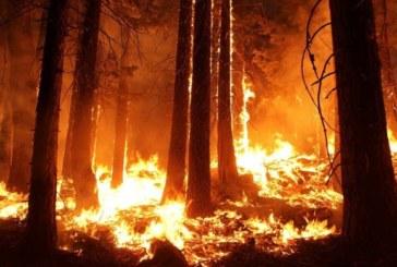 Eкстремален индекс за опасност от пожари в 9 области