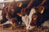 82,5 млн. лв. от държавната хазна в подкрепа на животновъдите