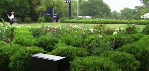 Mелания Tръмп реновира розовата градина на Белия дом