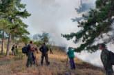 ОГНЕН УЖАС! Горят стотици декари гора в Хасковско
