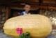 РЕКОРДЬОРИ! Тиква гигант 20 кг откъсна от градината си семейство от Елешница
