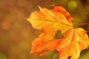 Това не знаете за есента