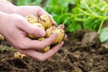 Отпускат допълнителни 56,6 млн. лева за земеделци