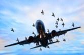 Птица удари и приземи самолета на вицето на Тръмп