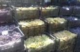 Грозде от Свиленградско по 1лв.-1.10 лв. заля пазара, търговците вземат по 5 ст./кг за мелене на място