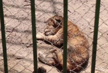 Петиция за лошите условия в зоопарковете у нас