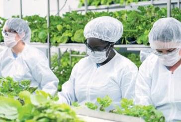 Напредва разработването на ваксина срещу Covid-19 на основата на тютюнево растение