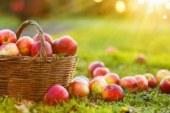 Дори една ябълка на ден предпазва от диабет