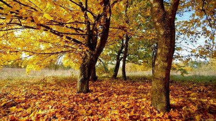 Октомврийски разкош!  Слънчево с температури до 24°