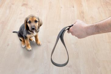 Насилието срещу животни в Гърция става углавно престъпление