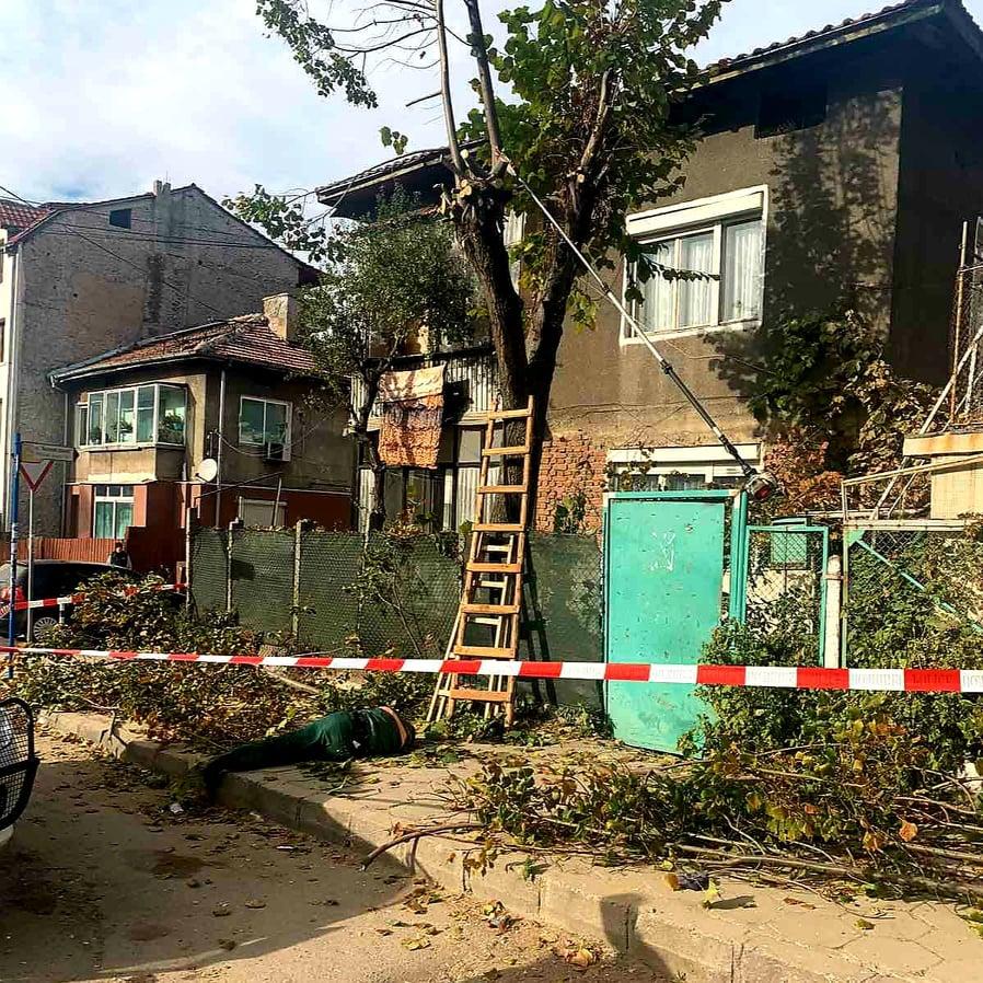 Фатален инцидент в Благоевград! Мъж падна от дърво и загина на място