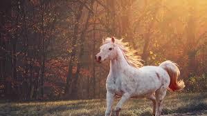 Загадъчните убийства на коне във Франция продължават