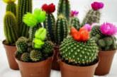 3 цветя у дома, които ви обричат на самота