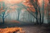 Времето: Облачно и мъгливо
