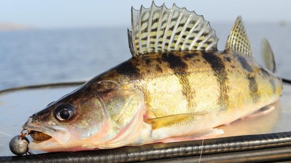 Норвегия може да забрани на ЕС и Великобритания риболова в нейни води от 1 януари