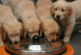 Как да храним кучето си? 5 често задавани въпроса