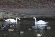 Езерото над Благоевград замръзна