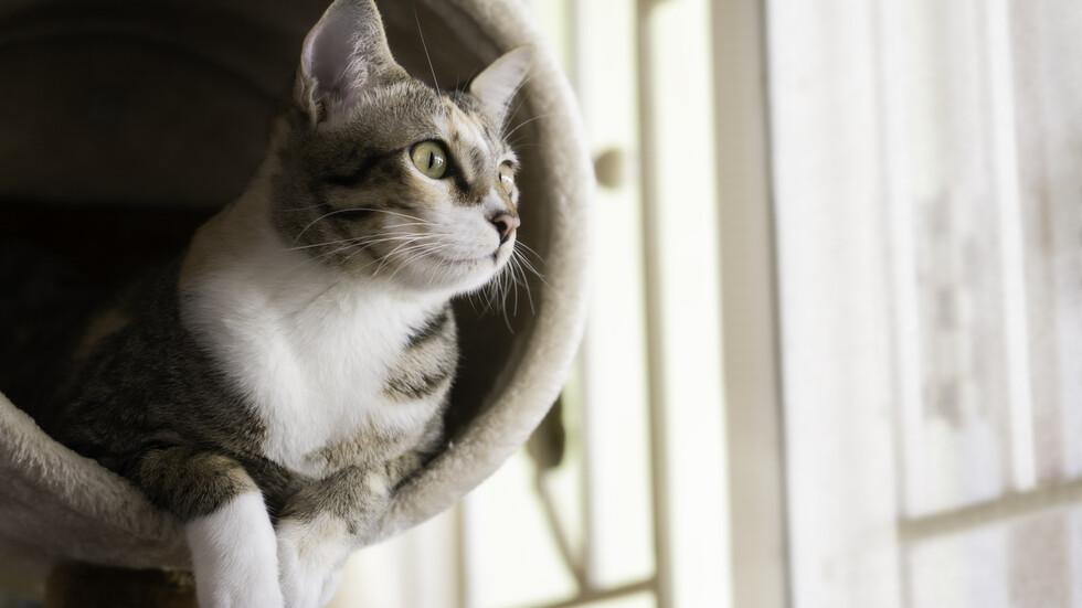 Разработват ваксина срещу алергия към котки