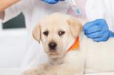 Учени: Вероятно и животните ще трябва да се ваксинират срещу COVID-19