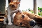 Кой е по-умен – кучето или котката