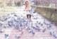 В пандемията Мая Нешкова намери красота и щастие в стотици гълъби, над които пое шефство