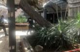 ОПАСЕН ИНЦИДЕНТ! Дърво се строполи в градската градина на Благоевград