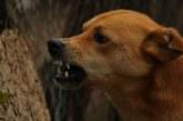Бездомни кучета нахапаха 9-годишно дете в Дупница