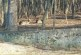 Двойка благородни елени намериха приют край Ресиловския манастир