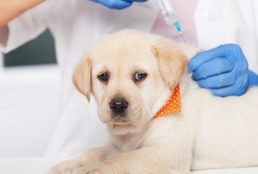ПЪРВА В СВЕТА: Русия регистрира ваксина срещу коронавируса за животни