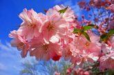 Слънчево с пролетни температури утре