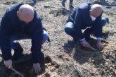 5000 декара опожарени гори в района на Кресна и Симитли вече са залесени