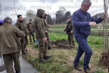 Общинари и горски озеленяват с червен дъб и липа стратегически терен в Кюстендил