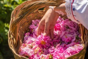 България на крачка да получи уникален код за защита на розовото масло