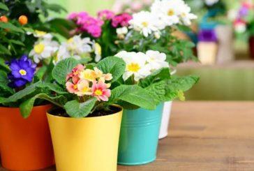Ето как бързо да съживите увехналите растения