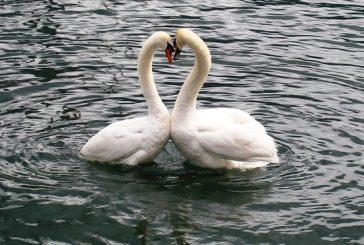 Топ 3 зодии, които обичат безусловно