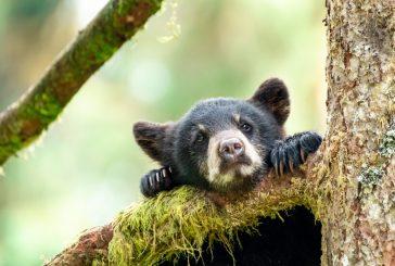 Спасиха още едно мече в Смолянско, ще бъде отведено в Парка за мечки в Белица