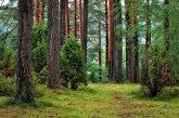 Промени в ръководствата на държавните горски стопанства в Петрич и Струмяни