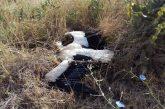 Жители на Бело поле сигнализираха за умряло щъркелче край селото, от РИОСВ посъветваха да се изхвърли в контейнера