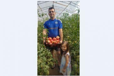 Евродепутатът от Дъбница А. Адемов с двойна реколта от розов домат благодарение на вярната си помощница - 4-г. внучка Симай