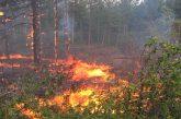 15 доброволни отряда сформирани в помощ на горските в Кюстендилско при пожари