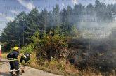 Голям пожар гори над Перник, обхвана гората при Големо Бучино